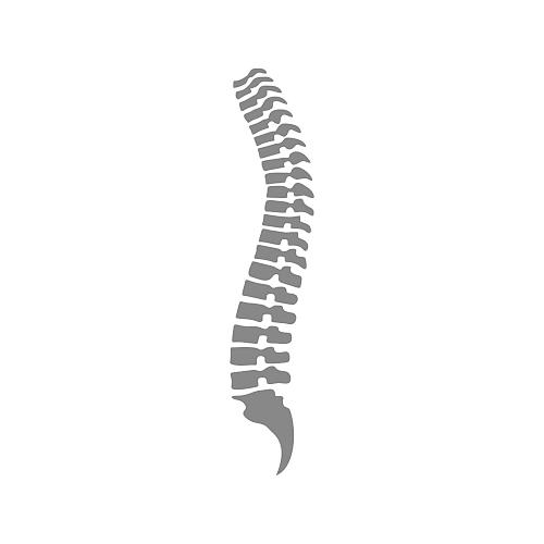 spina dorsale icona